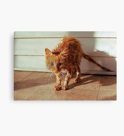 Wet Kitty Canvas Print