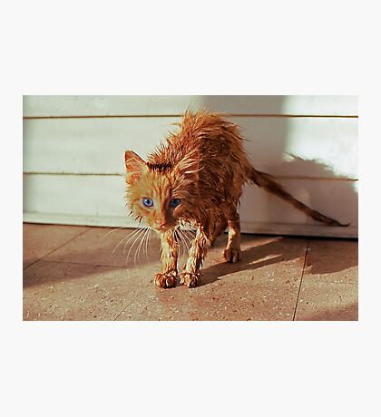 Wet Kitty Photographic Print