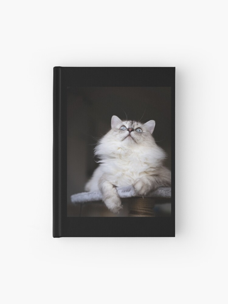 Ragdoll Cat With Blue Eyes Hardcover Journal By Gnocchilli Redbubble