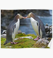 Yellow-eyed Penguins Poster