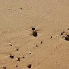 Beach by shane22