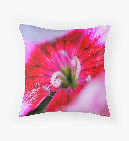 Dianthus carzophyllus close-up Throw Pillow