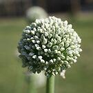 close up seeds by Jodie  Davison