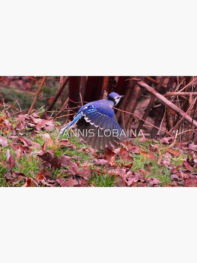 Totem  bird_blue Jays_by Yannis Lobaina by lobaina1979