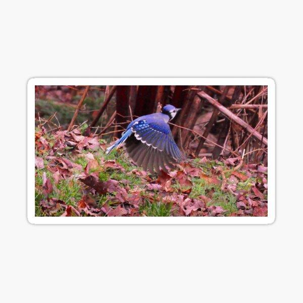 Totem  bird_blue Jays_by Yannis Lobaina Sticker