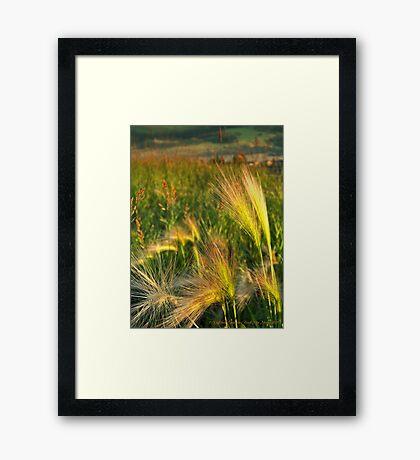 Foxtails Framed Print