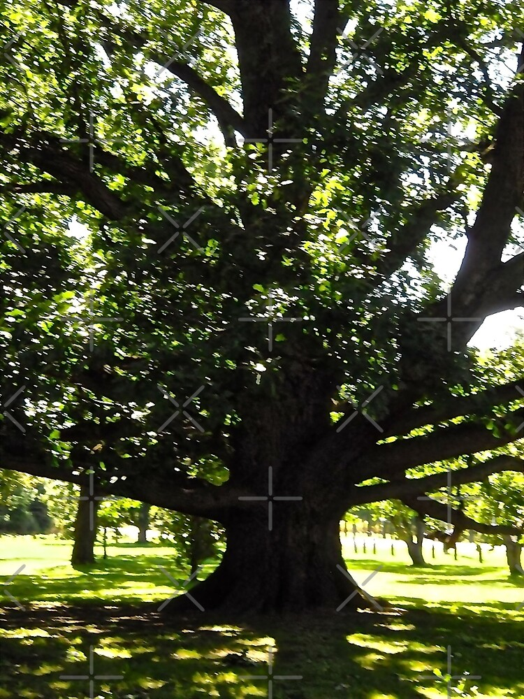 Old Tree at the Arboretum, Ottawa, ON Canada by Shulie1