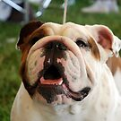 Olde English Bulldog by jodi payne
