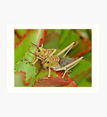 Locusts, Namibia Art Print