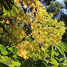 Leaves in the Winter Sunshine by aussiebushstick