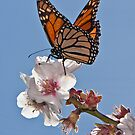 Magnificent Monarch #2 by Barb Leopold