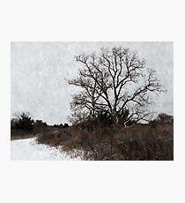 Chinaberry Tree Photographic Print