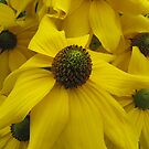 Yellow coneflower by orko