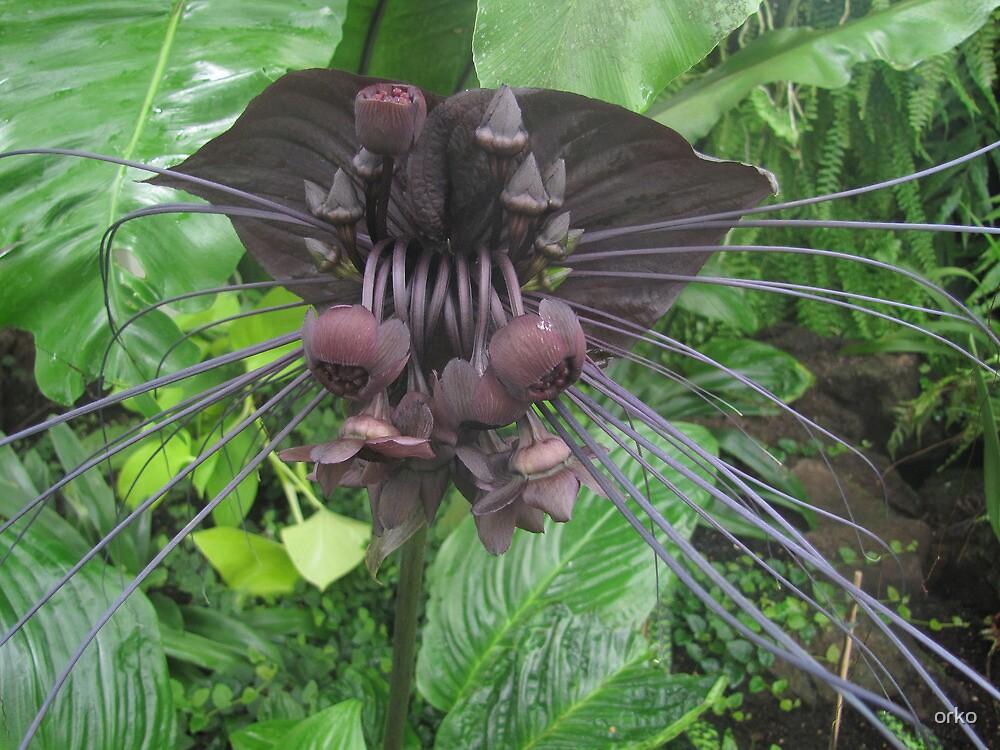 Bat Lily by orko