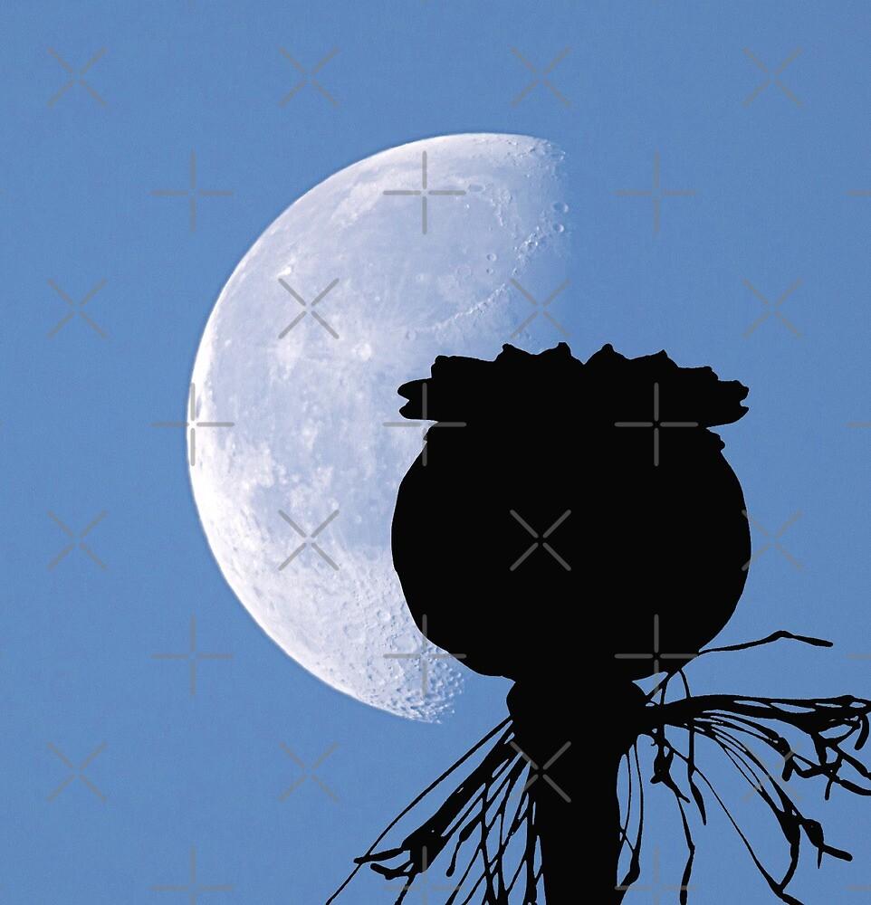 Poppy Pod Silhouette at Dusk - Lunar Opium Photography by PoppyPrintShop