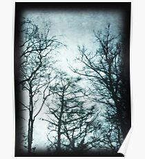 Forever Blue Trees Poster