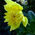 Yellow Blossom by Chris Goodwin