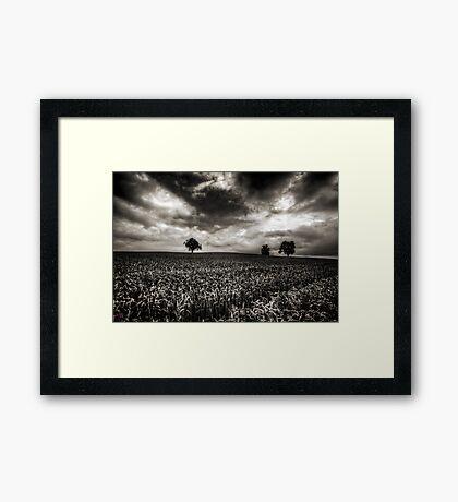 Weizen in der Schweiz Framed Print