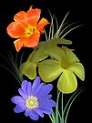 Flowers and colours by orko