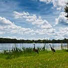 sandhills on the move by james smith