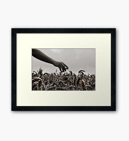 Streicheln der Weizen Framed Print