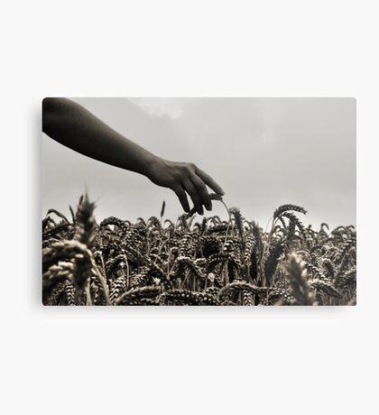 Streicheln der Weizen Metal Print