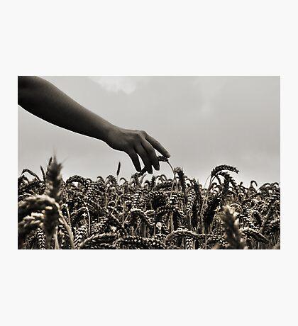 Streicheln der Weizen Photographic Print