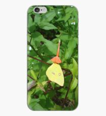 Cloudless Sulphur butterfly in Mahogany Vine iPhone Case
