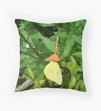 Cloudless Sulphur butterfly in Mahogany Vine Throw Pillow