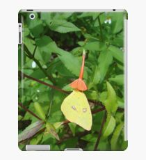 Cloudless Sulphur butterfly in Mahogany Vine iPad Case/Skin