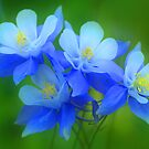 Columbine Bouquet by Steve  Taylor