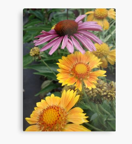 Coneflower and Indian Blankets Metal Print