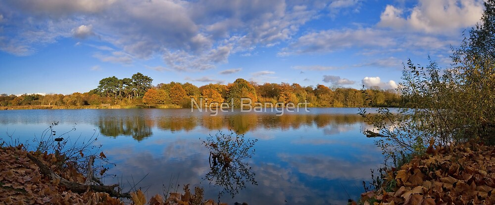 Hatfield Forest Lake by Nigel Bangert