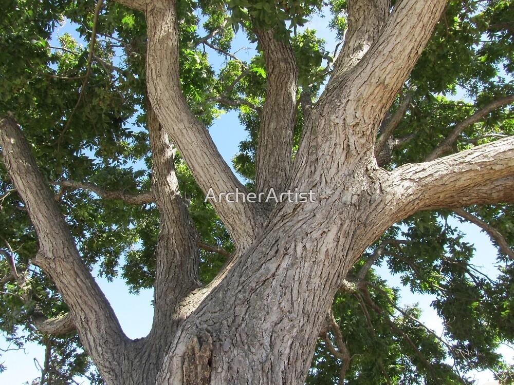 Tree Branches by ArcherArtist