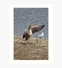 Greylag Goose Art Print