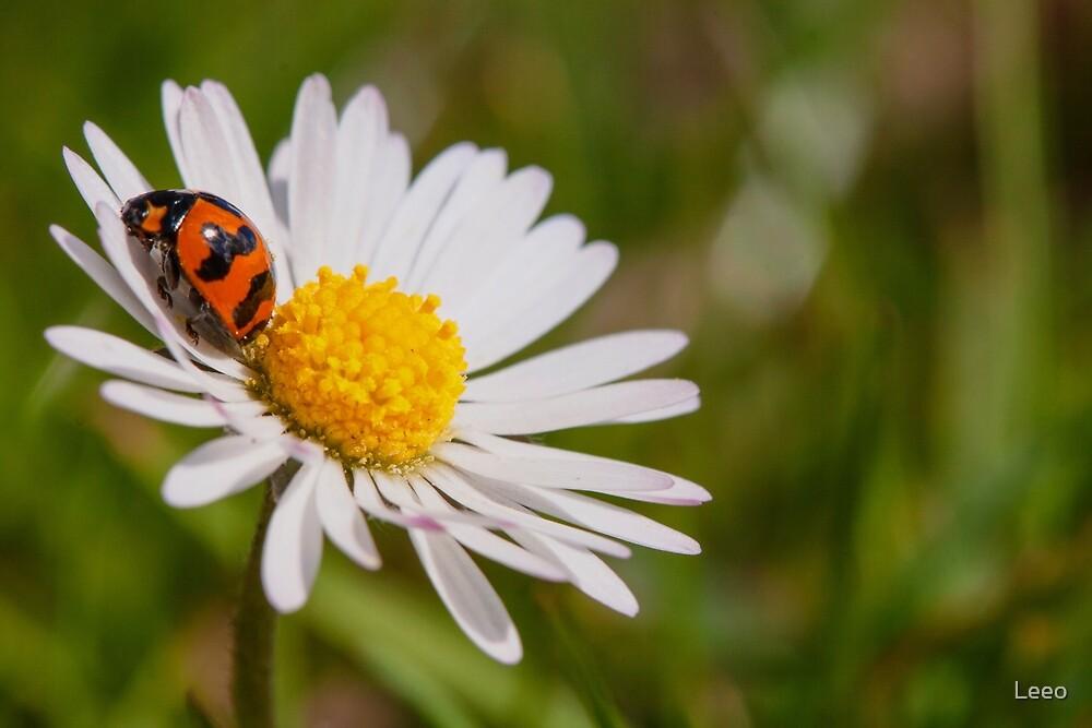 ~ Ladybug ~ by Leeo