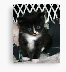 cute little kitty Canvas Print