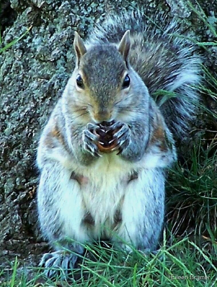 Squirrel Friend by Eileen Brymer