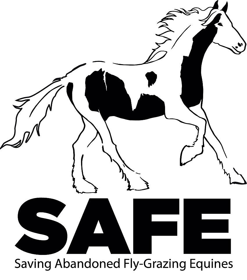 Saving Abandoned and Fly-grazing Equines by TraceySafe
