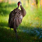 preening by james smith