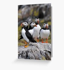 Puffin Group Greeting Card
