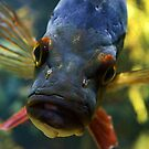Fish Face by Mattie Bryant