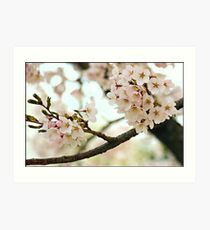 Japanese Cherry Blossoms V Art Print