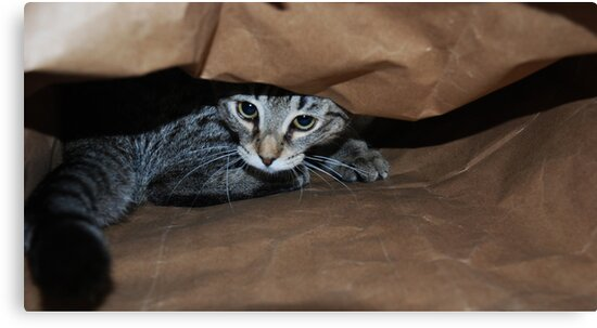Cat In The Bag by jodi payne