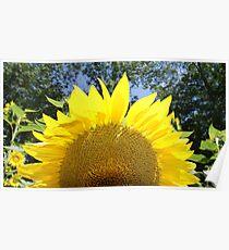 Sunflower Sunrise! Poster