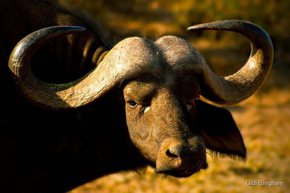 African Buffalo by Didi Bingham