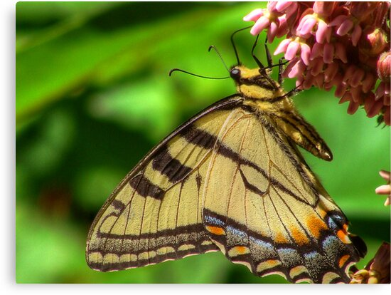Wings on Petals by vigor