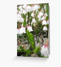 Clusters Greeting Card