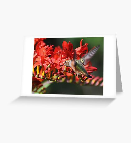 Eating on the Fly Greeting Card