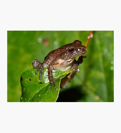 Peeper Chillin' on a Leaf Photographic Print